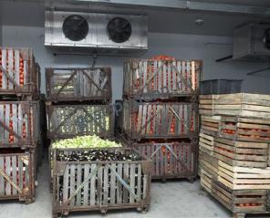 Хранение овощей на овощебазах